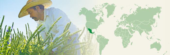 Naturkost de México S. de R.L. de C.V.